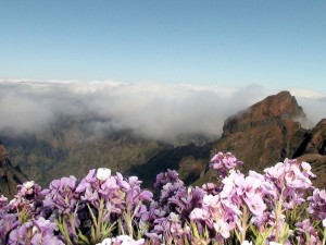 Most exciting March 2015 events in Madeira